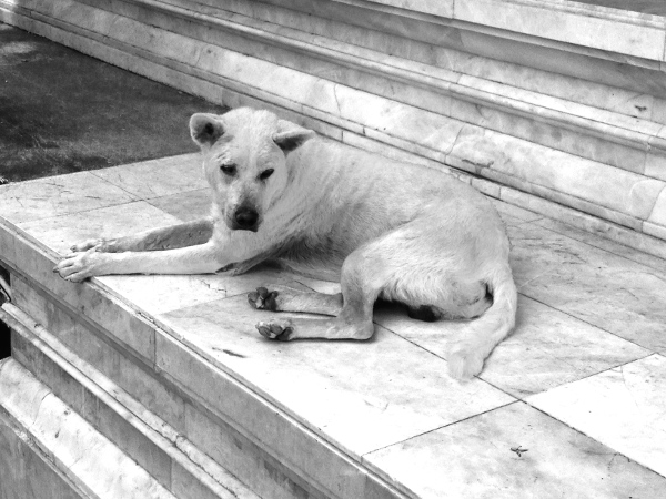 Buddist Dog