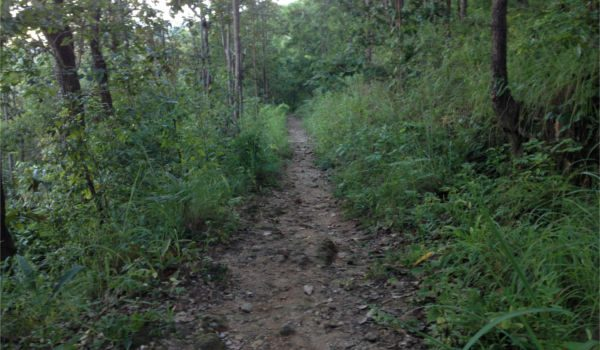 Easy Guide Hiking Doi Suthep