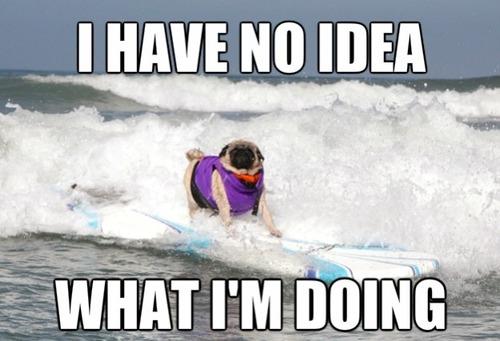 Surfing Meme