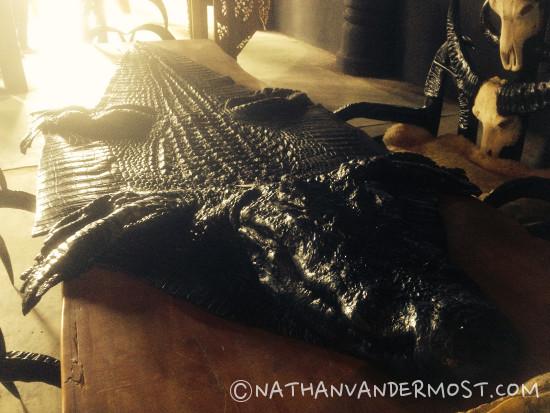 Aligator Skin