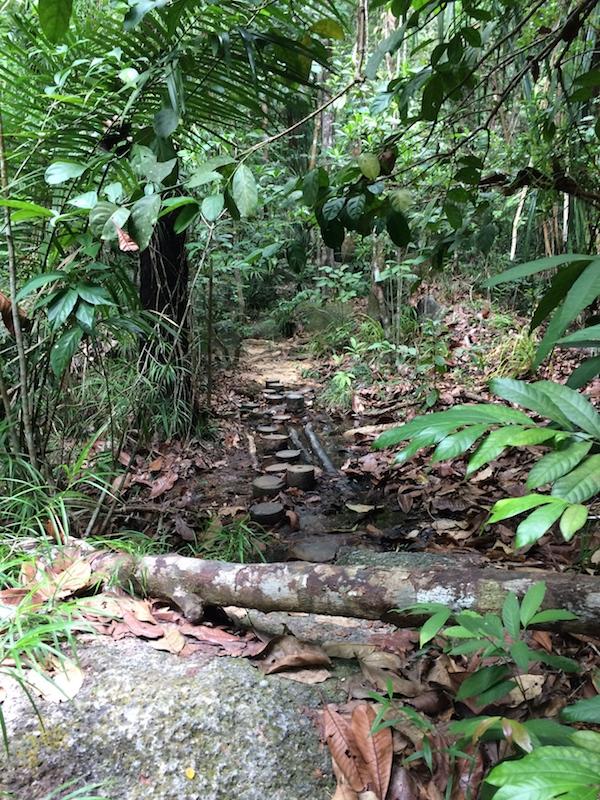 Jungle-Trail